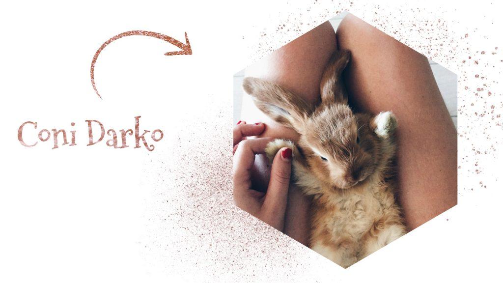 conejo belier mini loop