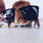 conidarko conejo belier cuidados